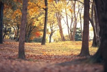 秋になって体調を崩さないコツ